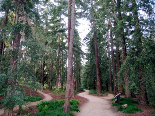 Arboretum500